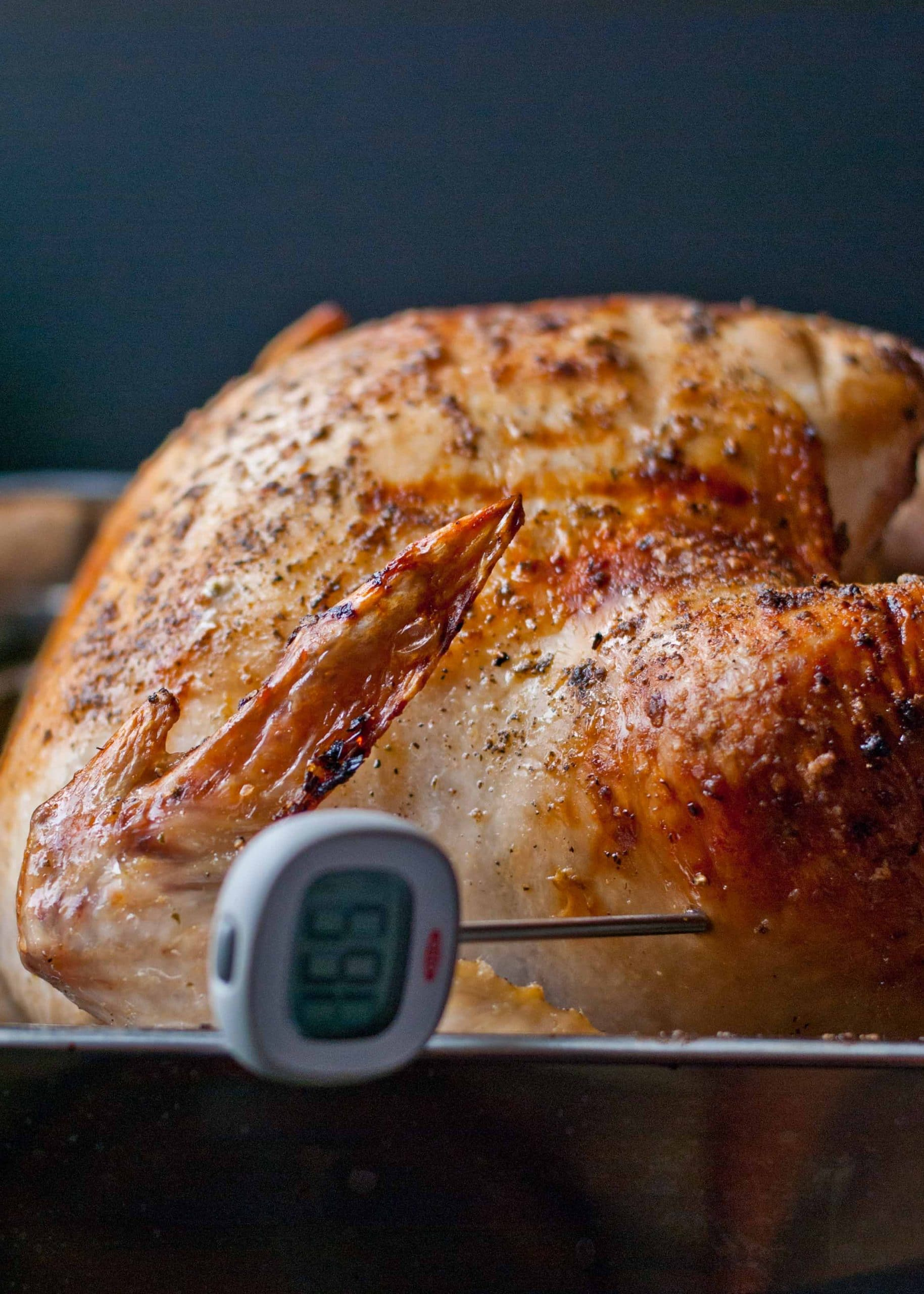 a cooked oven roasted turkey with golden brown skin reads 165 degrees F on a meat thermometer