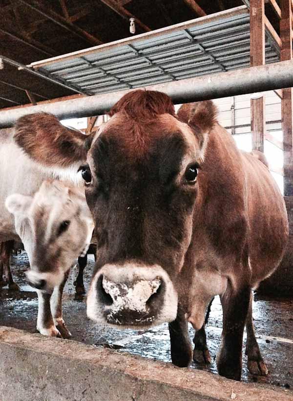 ohio-dairy-adventure-4