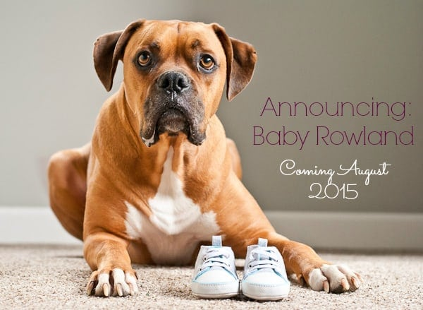 pregnancy-announcement-with-dog