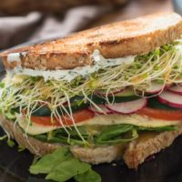 Loaded with tomatoes, cucumber, radish, and herbed cream cheese this is the best veggie sandwich I've ever had!